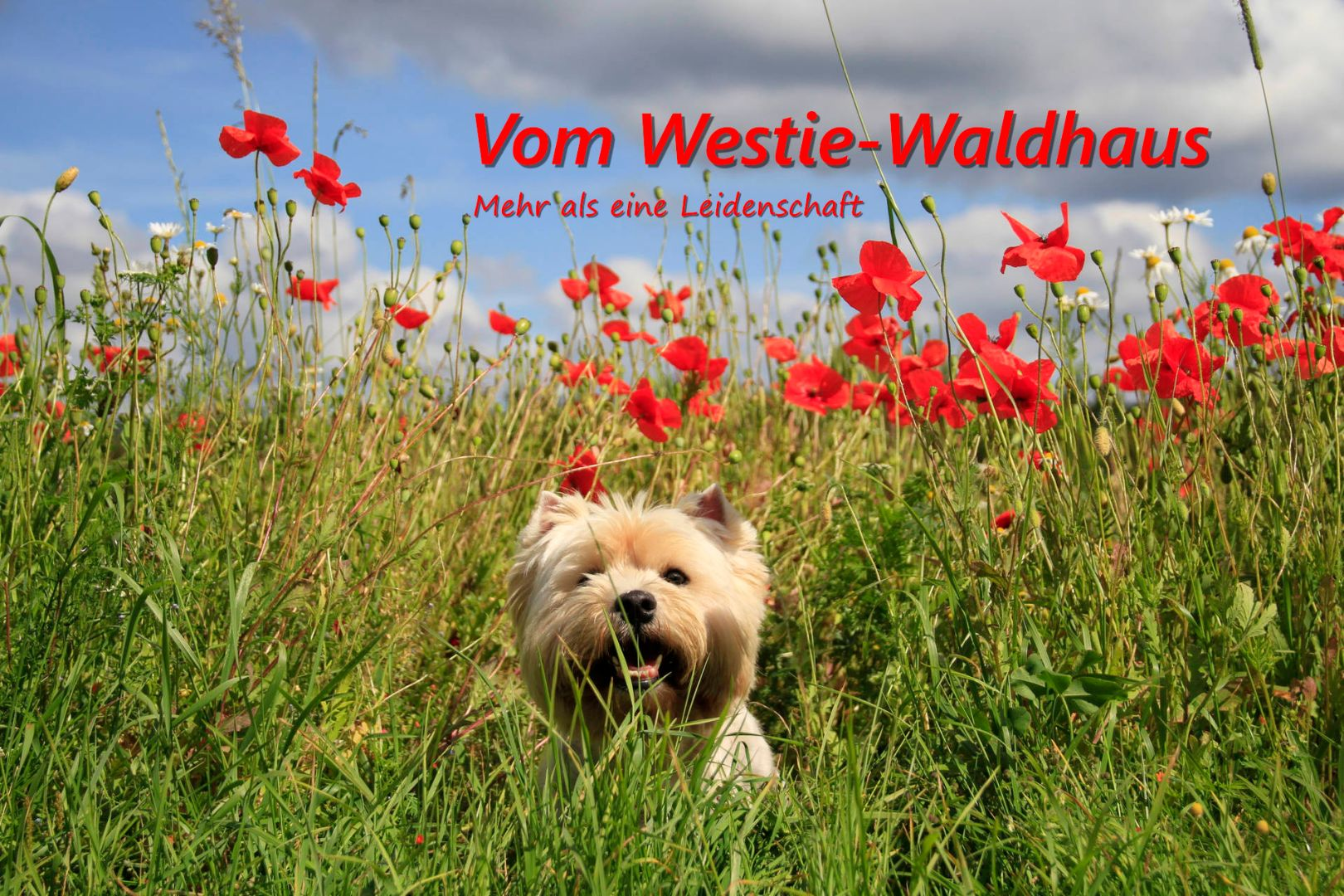 Vom Westie-Waldhaus